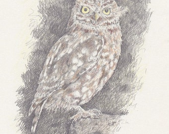 Little Owl A4 Archival Print