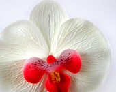 10 Big Cream Phalaenopsis Heads Artificial Flower - Silk Flowers - 3.75 inches - Wholesale Lot - for Wedding Work, Make Hair clips