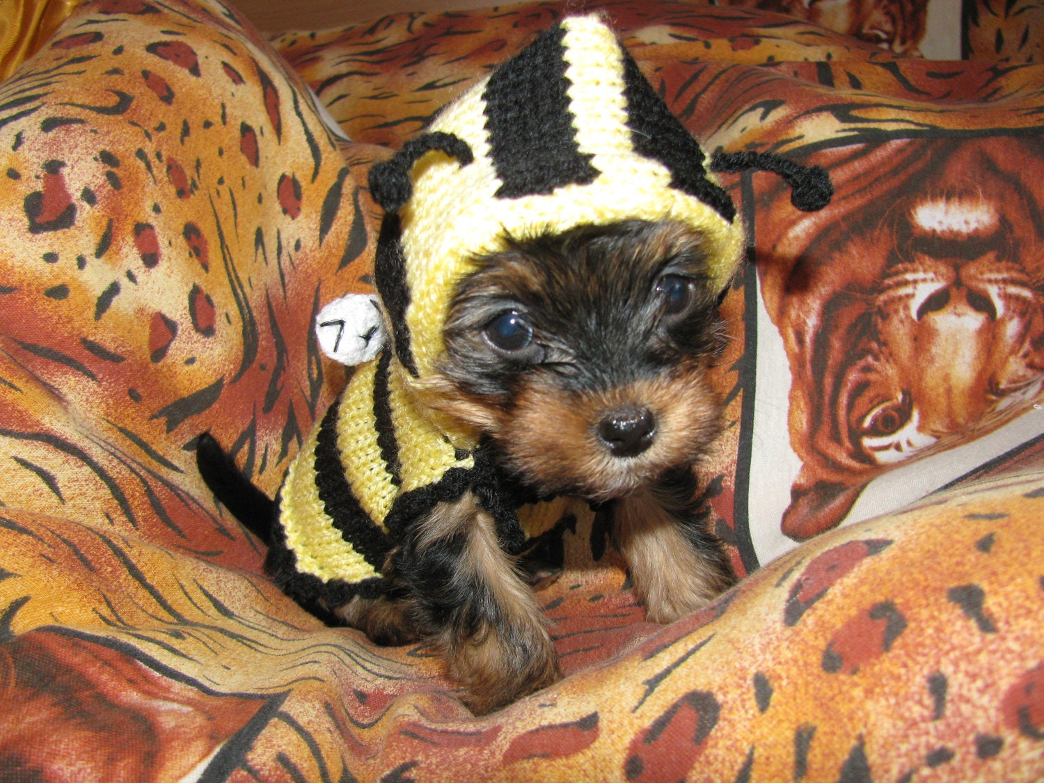Boy Small Dog Clothes Small Dog Clothes Dog Coat