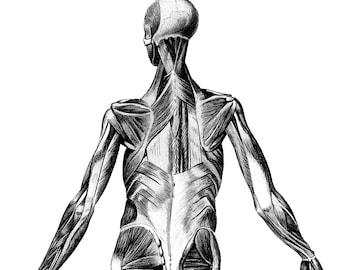 Anatomy posters, Body anatomy, Human Anatomy, 09