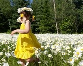 BULK, 500 Shasta Alaska Daisy Seeds, Daisies, Perennial Flower Seeds