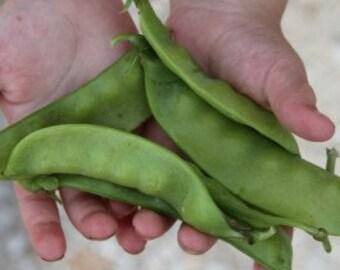 Oregon Sugar Pod II Peas, Grown on our Farm, 20 Seeds, Cheapseeds