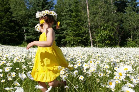 BULK, 500 Shasta Daisy Seeds, Daisies, Perennial Flower Seeds