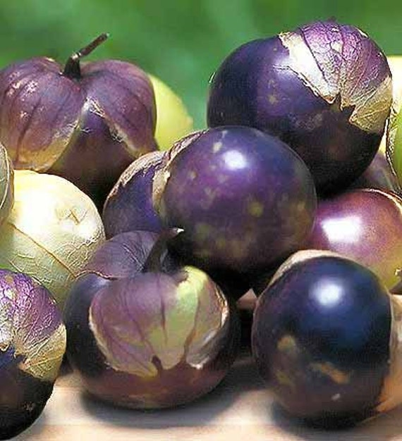Heirloom Purple Tomatillo Seeds, Excellent For Salsa, Jams and Preserves, Non GMO, 10 Seeds