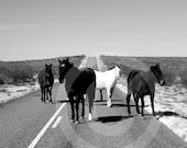 West Texas Black & White Photographs - Custom Orders