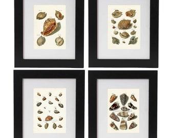 Seashell Art Print Set of 4, Beach Art, Beach Home Decor, Coastal Living, Shells, Posters, Marine Life Prints