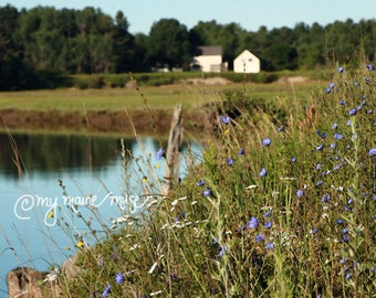 """20x16 Canvas Gallery Wrap, """"Summer Morning""""- Maine - Summer - Wildflowers"""