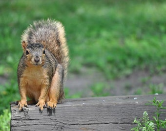 Squirrel Photo, Green and brown, fine photography prints, A Short Break