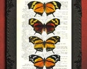 Monarch butterfly collection decor, altered art dictionary page, orange butterflies illustration book print decor