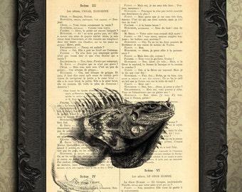 iguana art print lizard print black and white iguana portrait