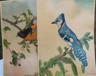 Art Victorian Bird Lithographs Blue Jay & Oriole Pair of Prints 1880 True Co Maine Audobon Chromolithographs