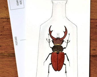 Beetle Art Postcard Stag Horn Beetle Art - from original watercolor painting 4x6