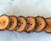 Wood Buttons - Branch Buttons - Handmade Wood Buttons-6 large handmade blackjack tree branch buttons with the bark- 1 2/5 inches diameter.