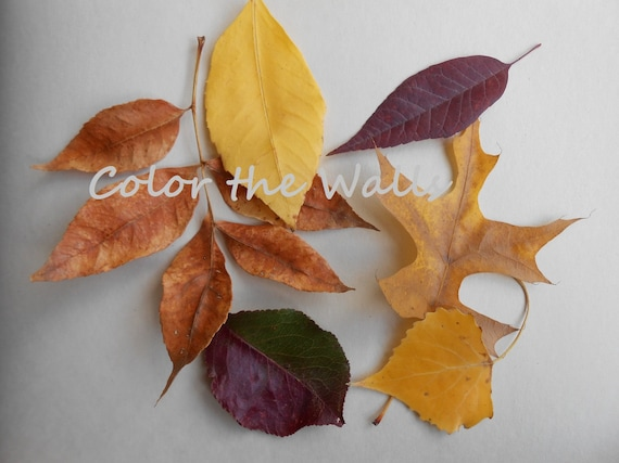 "Fall Photograph ""Leaf Collage"" Nature Photography"