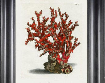 CORAL PRINT Ellis  Art Print 23 Beautiful Antique Sea Ocean Red Coral Nature to Frame Home Decoration Wall Hanging