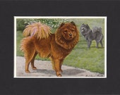 Chow 1919 Vintage Dog Print by Louis Agassiz Fuertes Small Print of a Signed Painting Mounted with Mat - Chow Print