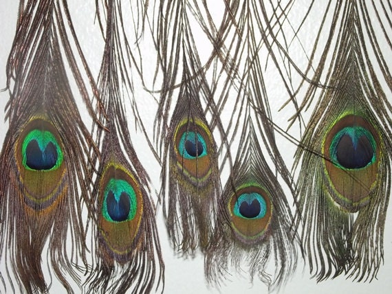 Peacock Feathers 5 Real Feathers for Crafting Milinary Wedding Jewelry Decor DESTASH