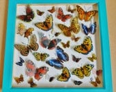 British Butterfly Collection - Faux Taxidermy - UK Seller - OOAK