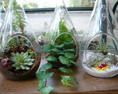 Seasons End Special---Made to Order Plant Kits for our Hanging Globes