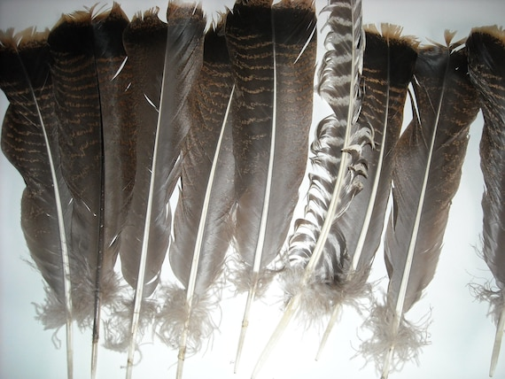vintage turkey feathers for crafts