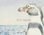 "Penguin cards, penguin note cards, all occasion, blank inside, Humboldt penguin, endangered wildlife, bird, seabird, 5"" X 7"" 6-pack"