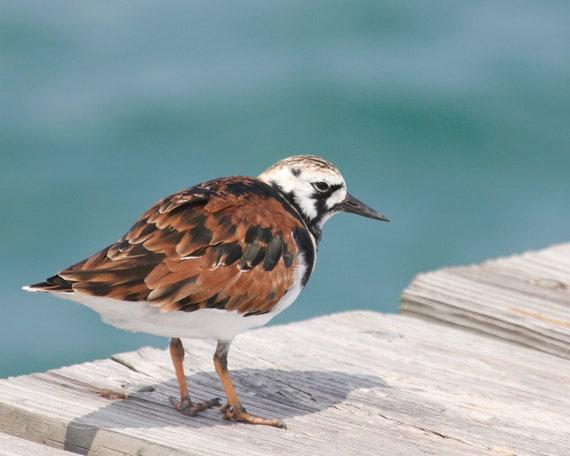 Little Bird on a Pier, ocean, blue, nursery wall decor