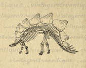 Stegosaurus Dinosaur Skeleton Graphic Image Digital Download Printable Vintage Clip Art for Transfers Printing etc HQ 300dpi No.2189