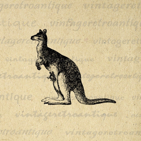 Kangaroo with Baby Kangaroo in Pouch Antique Graphic Digital Printable Download Image Vintage Clip Art HQ 300dpi No.573