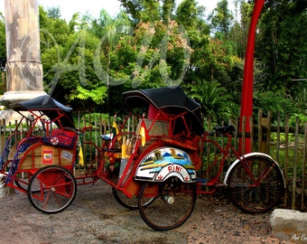 Red bicycles and rickshaw (PR) (16 x 20 canvas)
