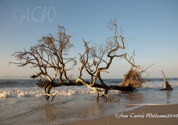 Bone Yard Beach at Botany Bay on Edisto Island South Carolina1 (PR)