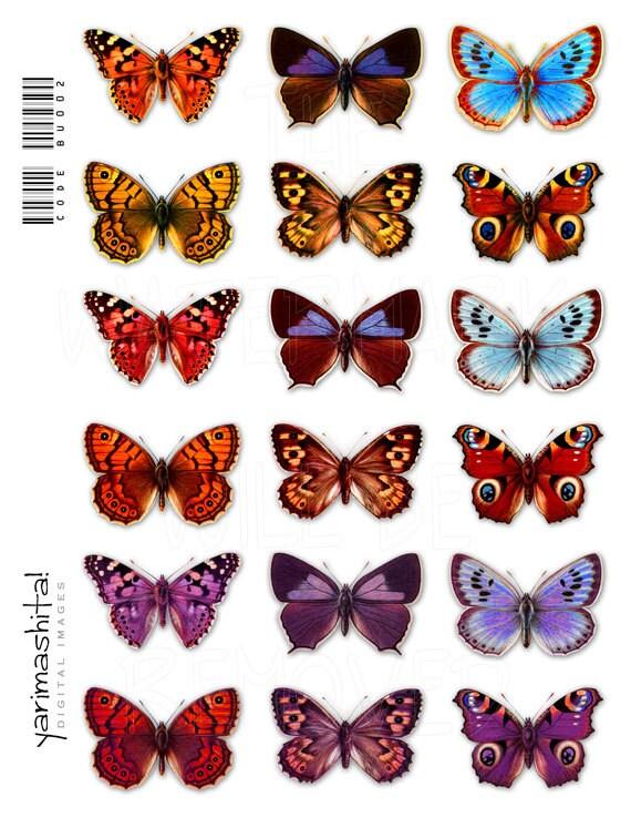 Фото коллажей из бабочек