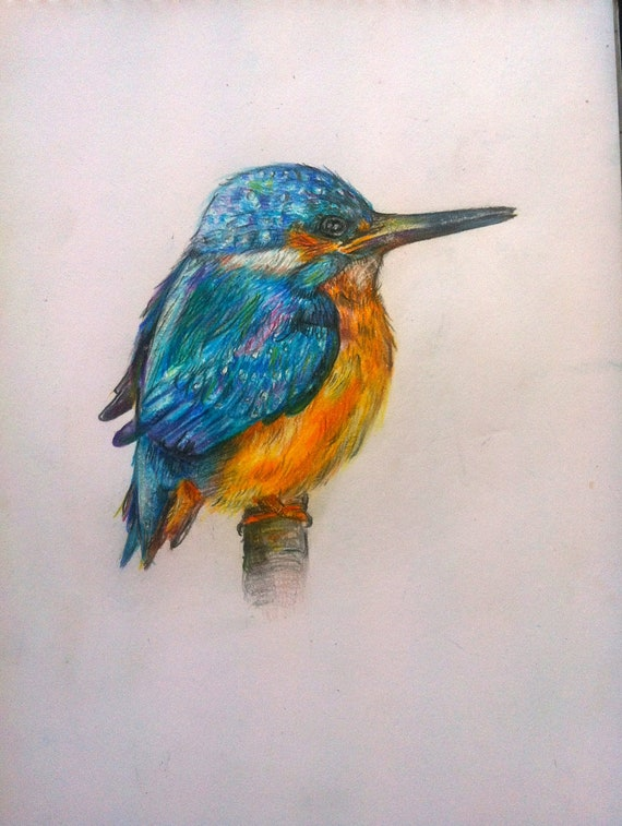Items similar to Kingfisher colour pencil drawing on Etsy