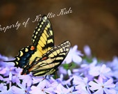 Photo Print 4 X 6 Eastern Tiger Swallowtail Butterfly - KraftieKidz