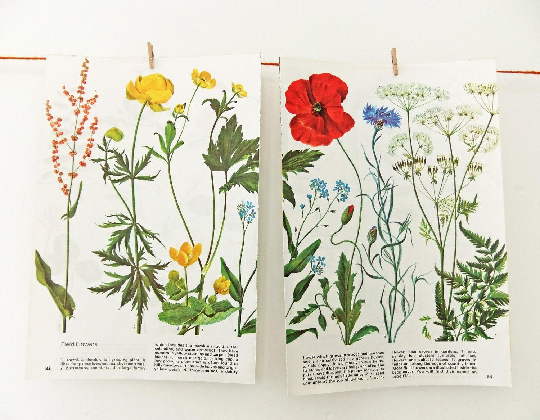 Field flower illustrations vintage flower drawings