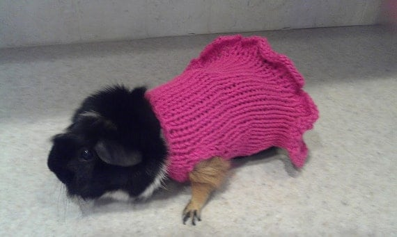 Guinea Pig Sweater Knitting Pattern : Hand Knit Guinea Pig Sweater Dress