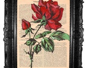 Red Rose - ORIGINAL ARTWORK , acrilic Hand Painted, Art Print, Mixed Mediaon vintage book