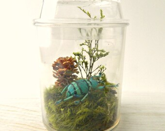 Bug Terrarium Kit, Real Dried Insect Specimen in Acrylic Jar, Eco Friendly Gift, Green Gift, Science Nerd, Geekery, Education, Boys, Kids