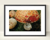 Burnt Orange/Red Amanita Mushroom. Fungus. Nature Photography. Print by OneFrameStories.