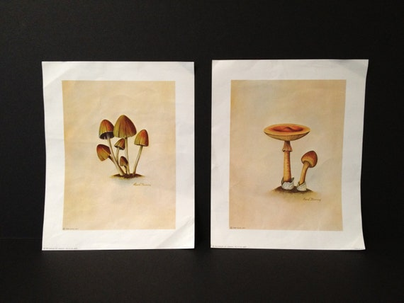 1960s Decoupage Papers:  Mushrooms, Wall Art