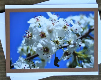 "Photo Notecard, Pear Tree Blossoms, 6.5"" x 5"""