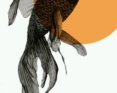 goldfish print 8x12