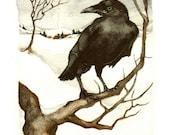 Winter Crow - thehermitage