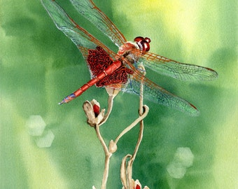 art giclee print Red Dragonfly from original watercolor