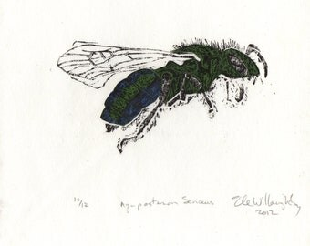 Metallic Green Bee Linocut - Lino Block Print of Agapostemon Sericeus the Sweat Bee in Blue and Green, Bee Biodiversity Print Collection