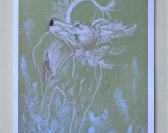 Cream Saluki Dog Art Note Cards By Cori Solomon