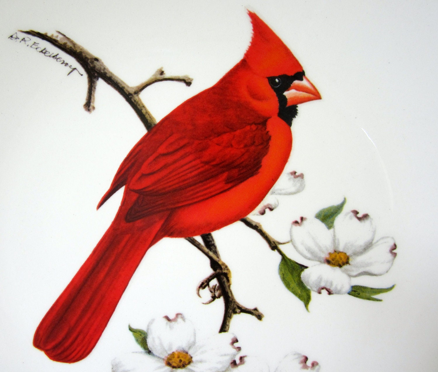 cardinal bird images free avon red cardinal collector plate dogwood 1974 gold american 5212