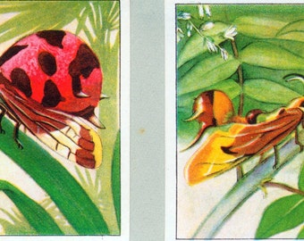 1932 Vintage Spanish Sheet of Illustrations on Insects of the Rainforest. Plate 17