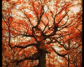 Le Chêne des Hindrés (Red Version) - Fine art Print  - Nature Photography - For Tree Lovers - Etsy Wall Art - TFTeam