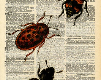 Vintage Book Print - Bugs Insects Art - Upcycled Antique Book Print - Salvaged Book Decor - Natural History Beetle
