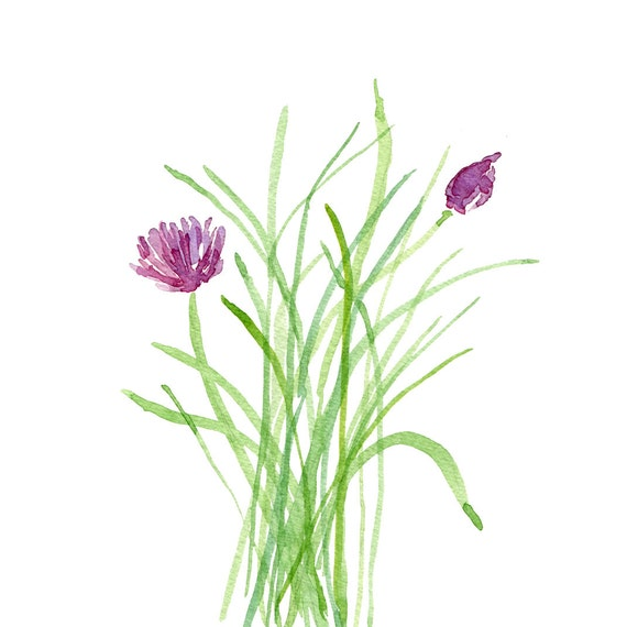 Cabbage Rose Flower Print Purple Abstract Art Kitchen Wall: Chives Print Of Original Watercolor Painting By TheJoyofColor